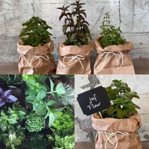 bedankje cadeau juf jufcadeau kruidenplantjes met krijtbordje liefslabel